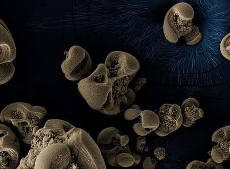 Etude: Une nouvelle bactérie made in Belgium (et UCLouvain)