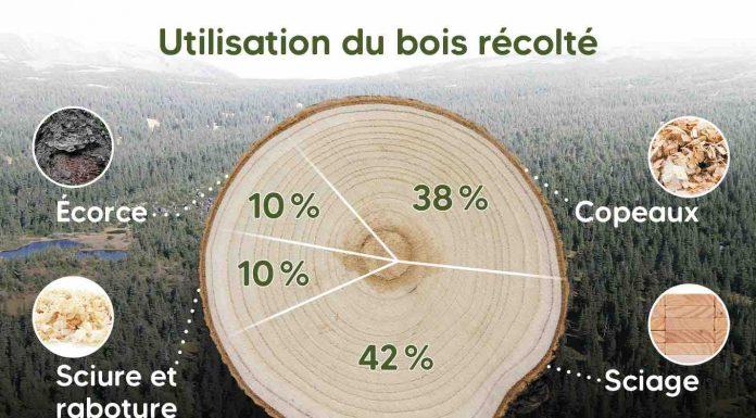 La forêt démystifiée : Comment les arbres récoltés au Québec sont-ils utilisés?