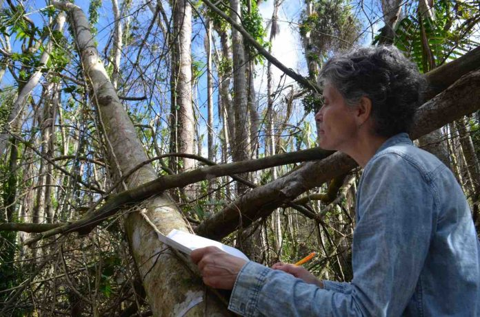 Research: For Big, Old Trees, It's a Downhill Slide When It Comes to Reproduction